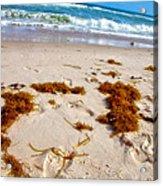 Sitting On The Beach Acrylic Print by Toni Hopper