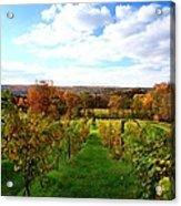 Six Miles Creek Vineyard Acrylic Print by Paul Ge
