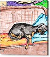 Sleeping Rottweiler Dog Acrylic Print by Jera Sky