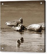 Smile Pretty For The Camera Acrylic Print by Donna Blackhall