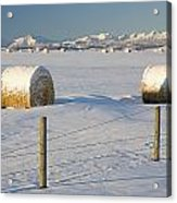 Snow Covered Hay Bales In A Snow Acrylic Print by Michael Interisano