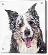 Snow Covered Acrylic Print by Joye Ardyn Durham