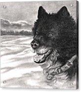 Snow Dog Acrylic Print by Kathleen Kelly Thompson