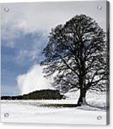 Snowy Field And Tree Acrylic Print by John Short