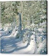 Snowy Footpath In Winter Wonderland Acrylic Print by Heiko Koehrer-Wagner
