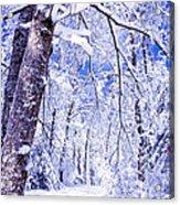 Snowy Path Acrylic Print by Rob Travis