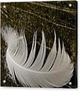 Soft Curve One Acrylic Print by Odd Jeppesen
