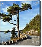 Somes Sound Maine Acrylic Print by John Greim