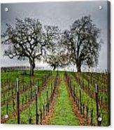 Sonoma County Vineyard Acrylic Print by Joan McDaniel