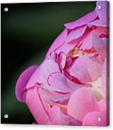 Sorbet Peony Acrylic Print by Ruthie Lombardi