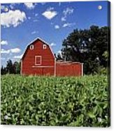 Soybean Field And Red Barn Near Anola Acrylic Print by Dave Reede