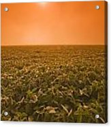 Soybean Field On A Misty Morning Acrylic Print by Dave Reede