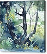 Spanish Olive Trees Acrylic Print by Stephanie Aarons