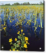 Spring Flood Plains With Wildflowers Acrylic Print by Norbert Rosing