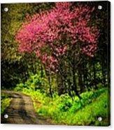 Spring Mountain Road Acrylic Print by Michael L Kimble