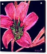 Spring Time Acrylic Print by Melvin Moon