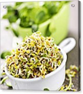 Sprouts In Cups Acrylic Print by Elena Elisseeva