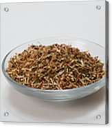 St Johns Wort Dried Herb Acrylic Print by Photo Researchers, Inc.