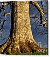 Standing Strong Oak Tree And Storm Clouds Acrylic Print by Thomas R Fletcher