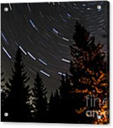 Star Trails Above Spruce Tree Line Acrylic Print by Darcy Michaelchuk