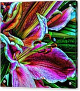 Stargazer Lilies Up Close And Personal Acrylic Print by Bill Tiepelman