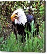 Stay Away From My Dinner Acrylic Print by Don Mann