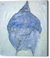 Stellar Jay From  Back Acrylic Print by Debbi Chan