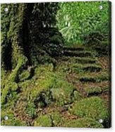 Steps In The Wild Garden, Galnleam Acrylic Print by The Irish Image Collection