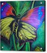 Still Butterfly Acrylic Print by Juliana Dube