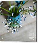 Still Life 04 Acrylic Print by Nailia Schwarz