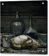 Still Life With Bear Skull Acrylic Print by Priska Wettstein