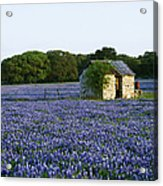 Stone Shed In Field Of Bluebonnets Acrylic Print by Jeremy Woodhouse