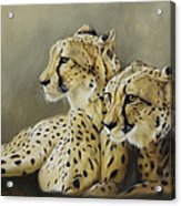 Stranger In The Midst. Acrylic Print by Lucinda Coldrey