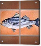 Striped Bass Acrylic Print by Andrew Drozdowicz