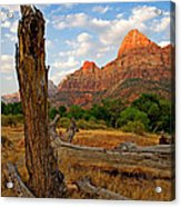 Stumped At Zion Acrylic Print by Peter Tellone