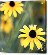 Summer Memories  Acrylic Print by Leslie Leda
