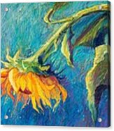 Sunflower Acrylic Print by Candy Mayer