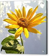 Sunflower Acrylic Print by Marilyn Sargent