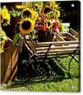 Sunflowers  Acrylic Print by Susan Elise Shiebler