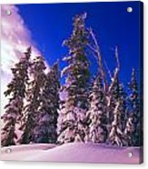 Sunrise Over Snow-covered Pine Trees Acrylic Print by Natural Selection Craig Tuttle