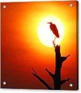 Sunrise Sentinel Acrylic Print by Jessie Dickson