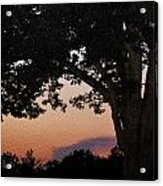 Sunset Over A Witness Tree Acrylic Print by Dave Sandt