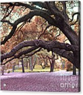Surreal Old Oak Tree South Carolina Fall Colors Acrylic Print by Kathy Fornal