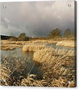Swampland Acrylic Print by Robert Lacy