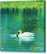 Swan Lake Acrylic Print by Judi Bagwell