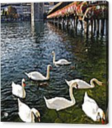 Swans Of The Chapel Bridge Acrylic Print by George Oze