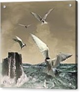 Terns In The Wind Acrylic Print by IM Spadecaller