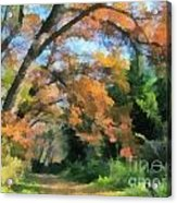 The Autumn Forest Acrylic Print by Odon Czintos