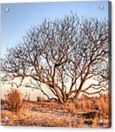 The Family Tree Acrylic Print by JC Findley