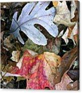 The Gathering Acrylic Print by Trish Hale